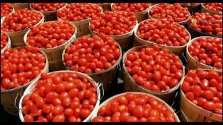 Patanjali Tomato Ketchup | Product by Patanjali Ayurveda