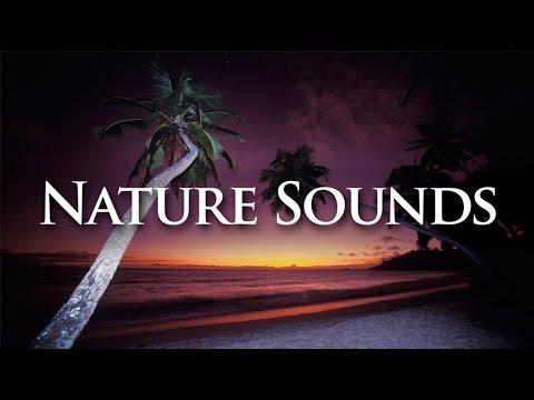 Nature Sounds | Ocean Waves @ Anse Intendance