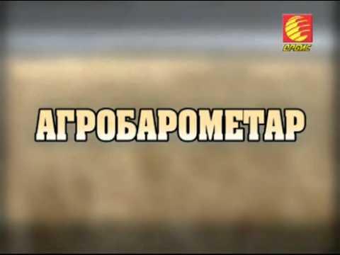 TV ORBIS - AGROBAROMETAR - KAKO DA NAPRAVITE DOMASNO VINO 15 09 13