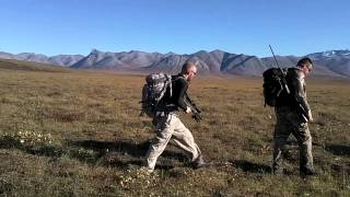 Caribou Hunt in Alaska with The Desert Tactical Arms SRS Covert Thumbnail