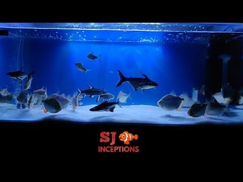 My Dollar Fish Tank