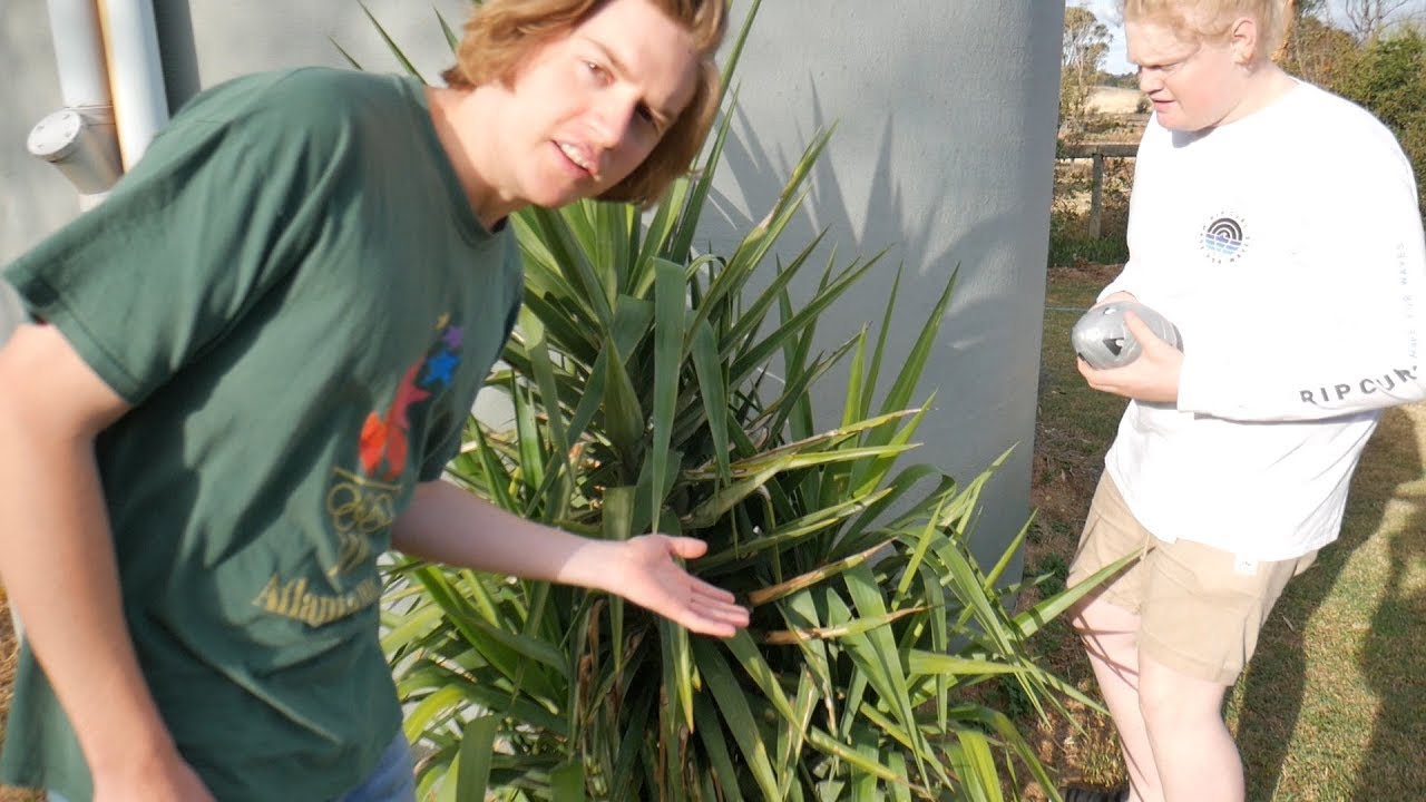 our-favourite-plants