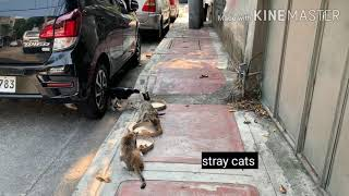 Cats and dogs feeding
