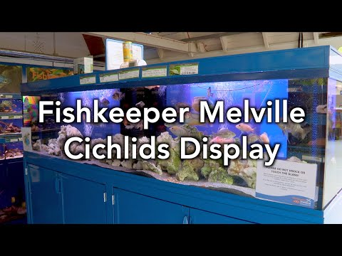 Tank Of The Month - Fishkeeper Melville Cichlids Display