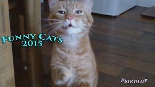 Смешное видео с кошками 2015 - Самое лучшее! Забавные кошки(Смешное видео с кошками 2015. Самая лучшая подборка! Забавные кошки. Смейтесь на здоровье., 2015-05-16T07:13:46.000Z)