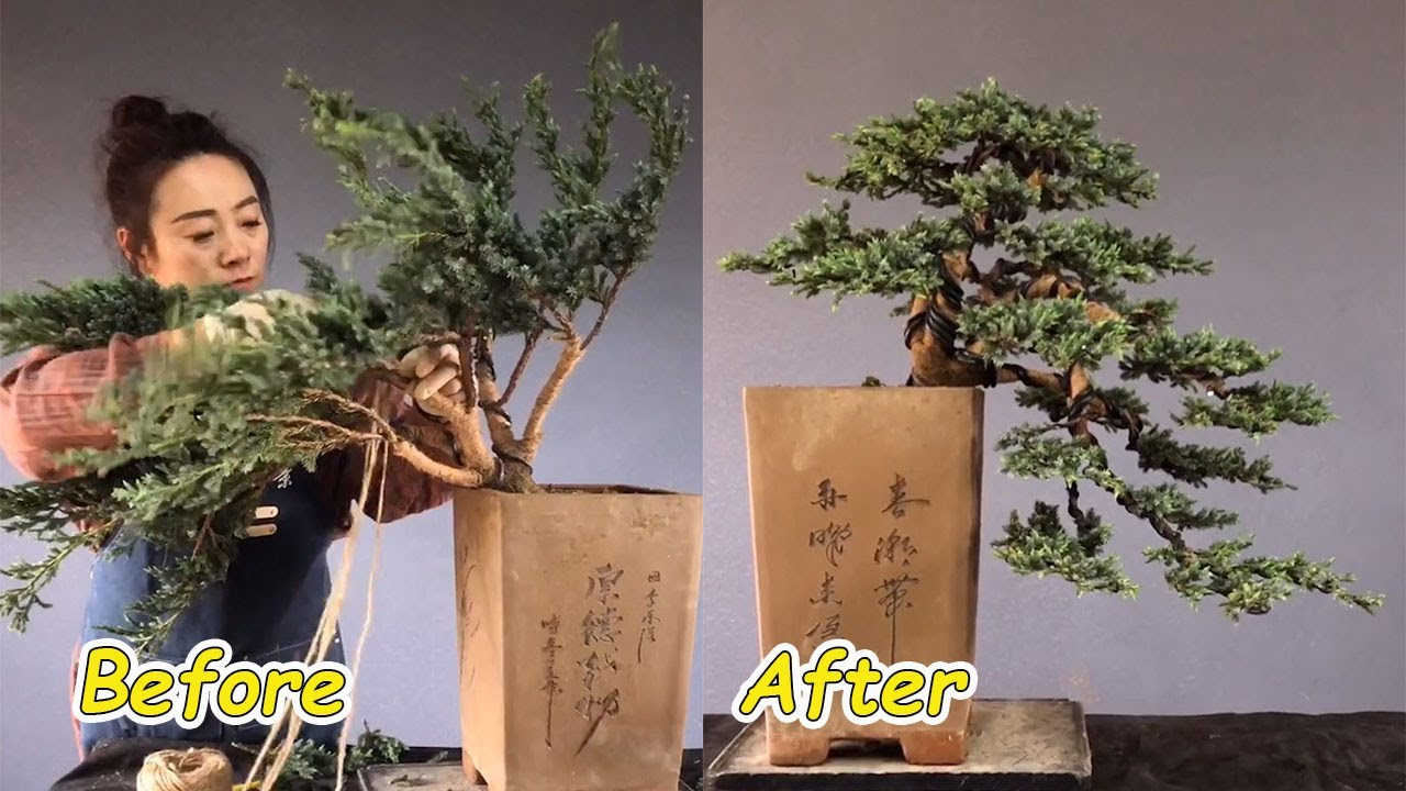 How to bend a bonsai - great bonsai bending skills #58