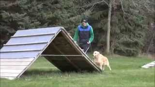 Lexie (golden Retriever) Dog Training Demonstration