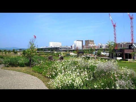 北彩都を歩く 夏の北彩都ガーデン2019