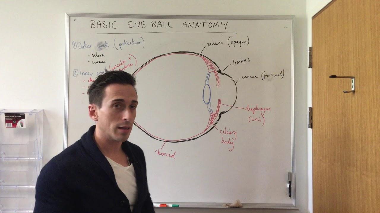 Basic Eye Anatomy and Physiology - YouTube