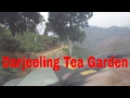 darjeeling tea garden way