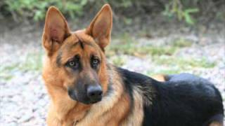 Indiana German Shepherds Past Litters A - D