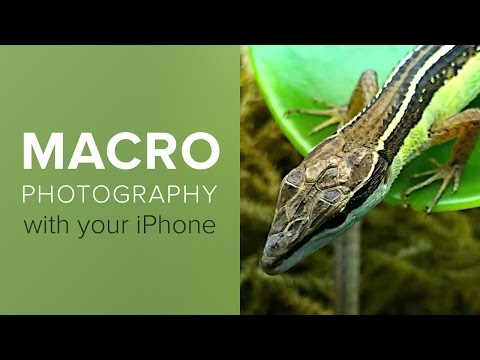 How To Shoot Close-Up and Macro Photography With Your iPhone