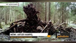 ARTUR HAMPEL (PUBLICYSTA, FUNDACJA DEVANA) - BAWARSKIE LASY DO WYCINKI - KORNIK JEDNAK GROŹNY