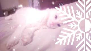 Мой кот модель клип