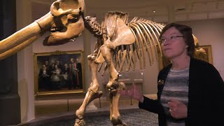 """""""alexander Von Humboldt And The United States: Art, Nature, And Culture"""" Curator's Video Tour"""