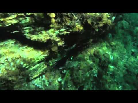 la mer d'arzew