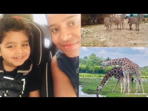 സിംഹങ്ങൾക്കിടയിലൂടെ ഒരു യാത്ര| African lions safari| Malayalam personal vlog