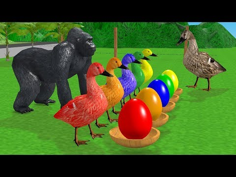 Learn Colors with Farm Animals for Children #Ducks and #SurpriseEggs-Baby Goose Cartoon