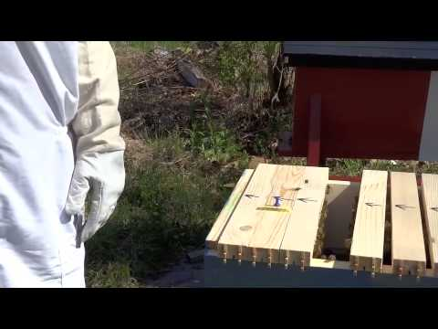 Horizontal Top Bar Hive Inspection AAF (May 16, 2015)
