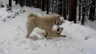 新雪の上で・・・。