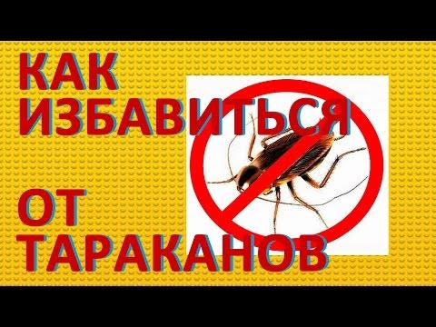 Как избавиться от тараканов.  Способы борьбы с тараканами