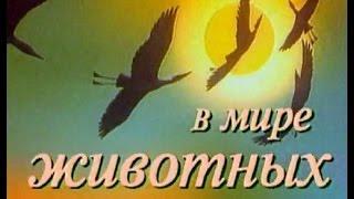 В мире животных с Николаем Дроздовым. Выпуск №54