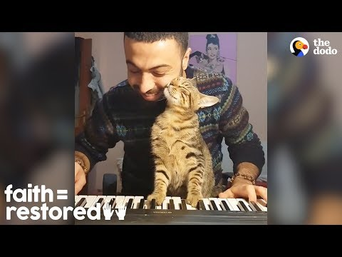 This Guy LOVES Playing Piano For His Rescue Cats  | The Dodo Faith=Restored