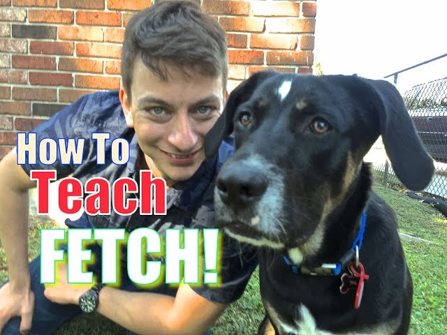 Everything YOU NEED to KNOW to TEACH your DOG a PERFECT FETCH!