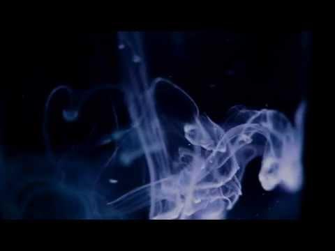 ALTER LEADCODE(オルターリードコード)- LIKE A STAR