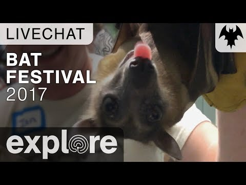 Bat Festival 2017 - Organization For Bat Conservation - Live Chat