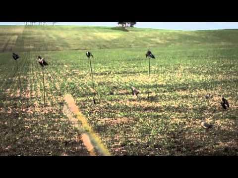 Uruguay Pigeon Hunting
