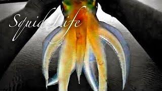 SQUID LIFE - VLOG 2 - HARIMITSU RR DESTROYER