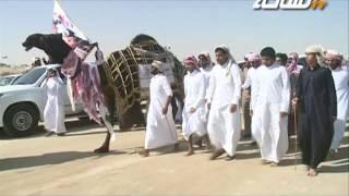 #جديد_الساحة   مسيرة فردية مهيوبة الجزيرة (أم المعارك) للمالك علي بن راشد آل عليان العذبه المري