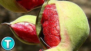 Top 10 Fruits You've Never Heard Of Part 7
