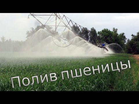 Полив пшеницы. ДДА 100. Сезон 2015