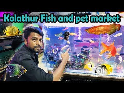 கொளத்தூர் வண்ண மீன்கள் தமிழ் |  Kolathur Fish and pet market chennai vlog 2018