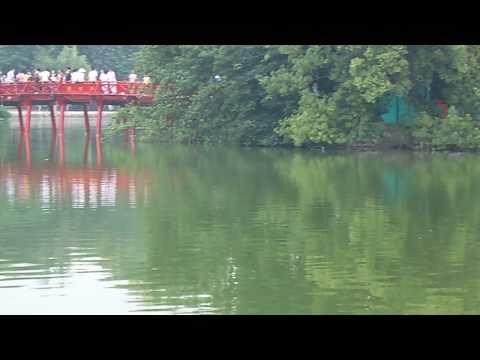 Cụ rùa Hồ Gươm nổi ngày 01/10/2010