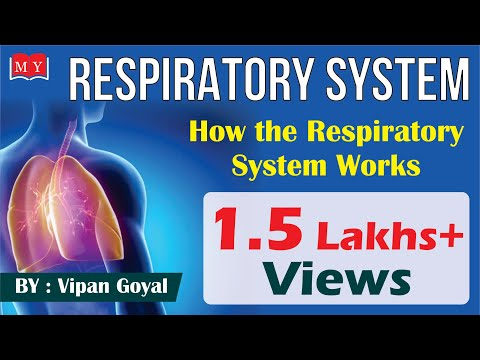 Respiratory System || How The Respiratory System Works || By Dr. Vipan Goyal