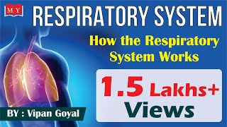 Respiratory System || How The Respiratory System Works || By D…