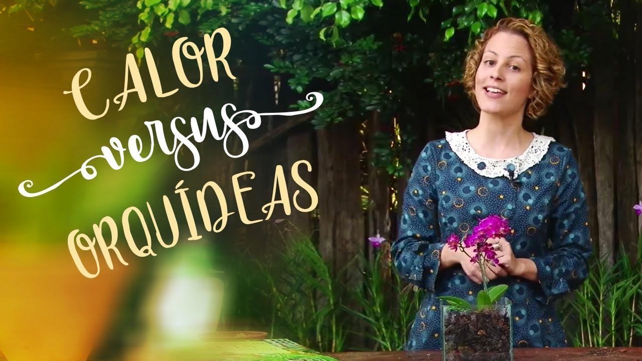 Como cuidar de orqu deas truque contra o calor youtube - Como cuidar las hortensias de exterior ...
