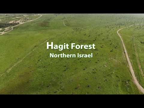 Hagit Forest- Northern Israel