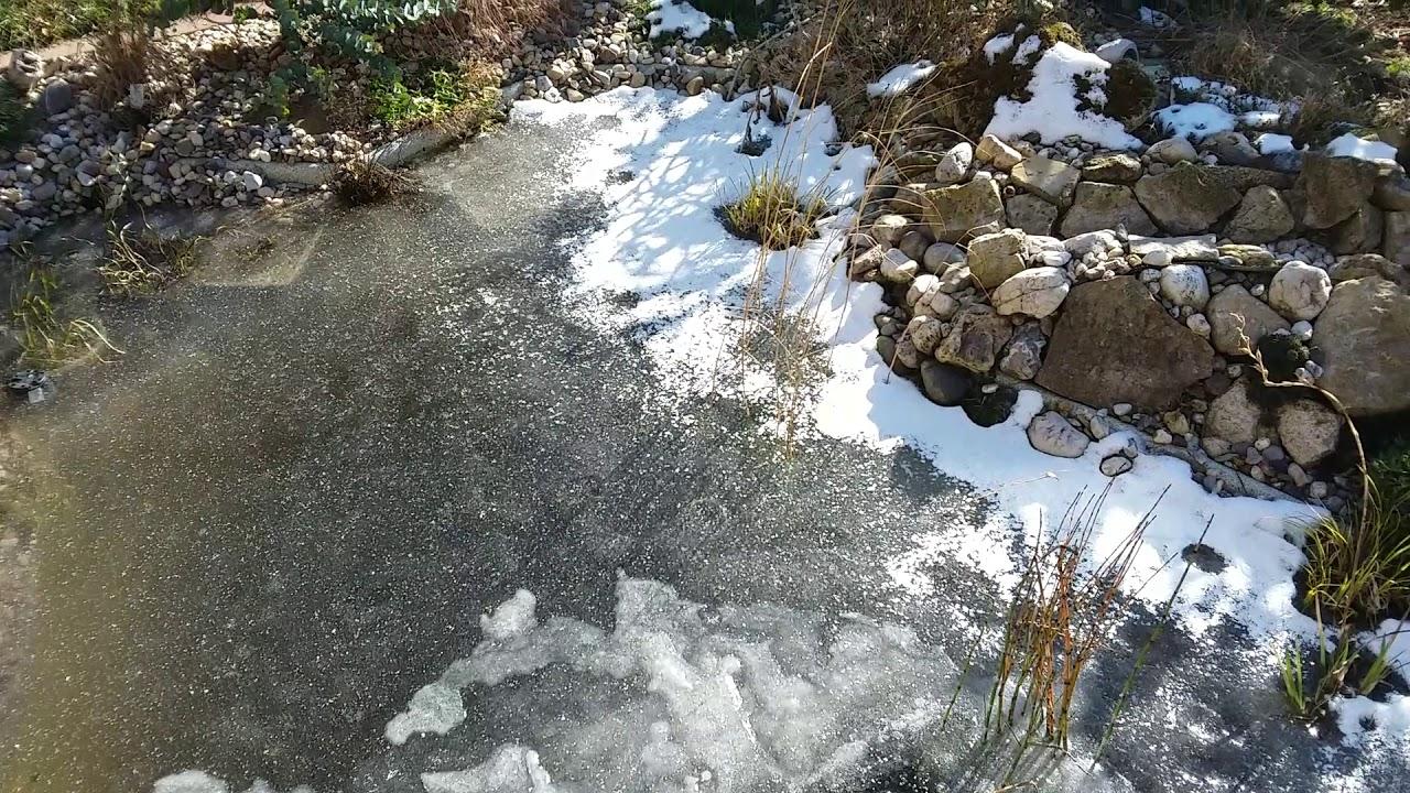 Gartenteich Ohne Eisfreihalter Nur Mit Kleiner Luftsprudelpumpe Bei 16c Gasaustausch Vorhanden