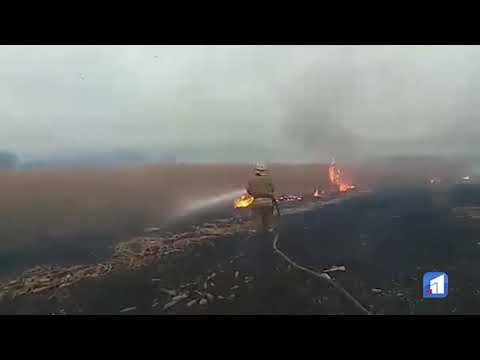 11 канал: Масштабні пожежі сталися в екосистемах області