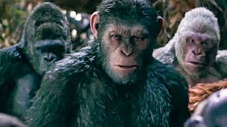 Download I Did Not Start This War Scene - WAR FOR THE PLANET OF THE APES (2017) Movie Clip