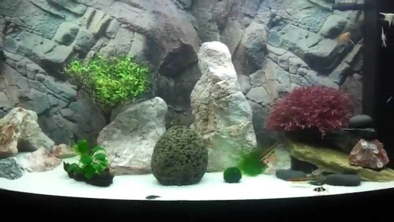 my juwel vision 260 aquarium youtube. Black Bedroom Furniture Sets. Home Design Ideas