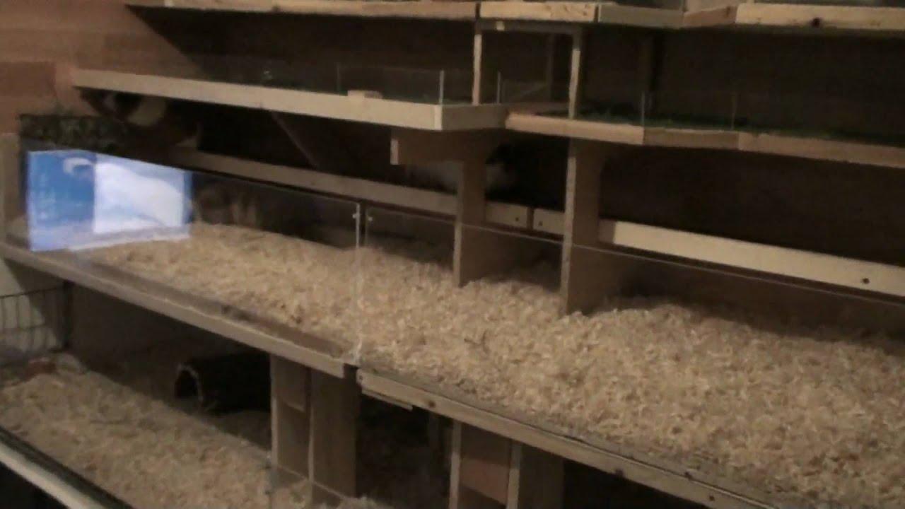 meerschweinchen gehege k fig 2 25m x 0 75m als. Black Bedroom Furniture Sets. Home Design Ideas