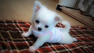 Funny Dogs 🐶😅 Funny and Cute Dogs (Part 2) [Epic Life]