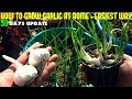 How To Grow Garlic At Home-Fast N Easy