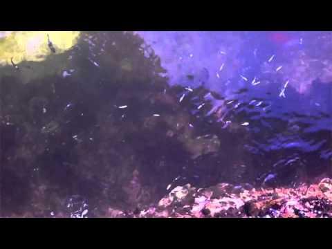 江ノ島から海面を覗き込む