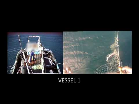 Operation Achilles: Vessel 1 - fish discarding (part one of two)